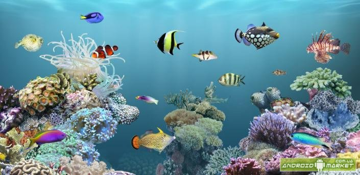 Aquarium donation live wallpaper живые обои в виде 3d