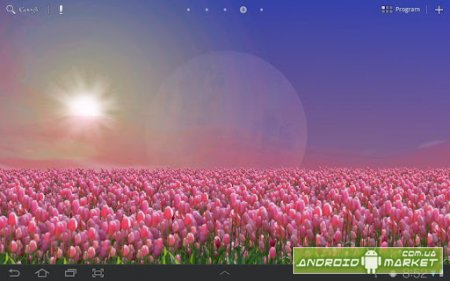 Tulip Field Live Wallpaper Full