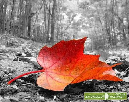 Color Splash Effect Pro � ������� ���� ��������
