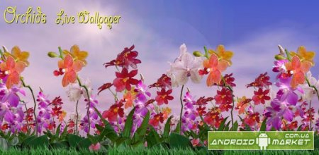 Orchids Live Wallpaper Full