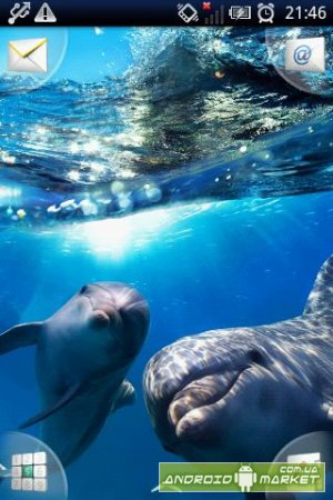 Magic Effect : Dolphins