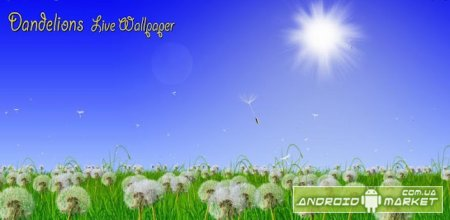 Dandelions Live Wallpaper  full