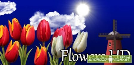 Flowers HD Live Wallpaper Full