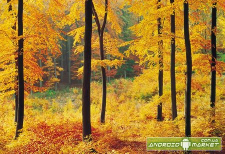 Autumn Forest Live Wallpaper