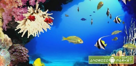 Beautiful Aquarium Live HD