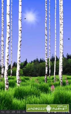 Birch Wood Live Wallpaper